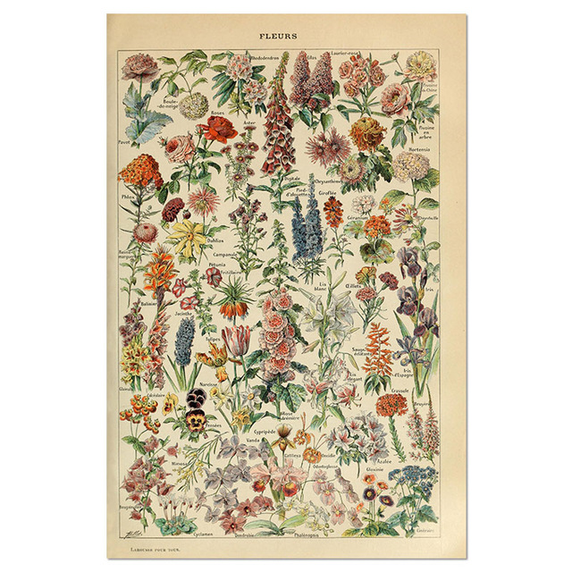 Animal-Botanical-Educational-Vintage-Poster-Butterfly-Posters-and-Prints-Fruit-Canvas-Painting-Vegetable-Picture-on-The.jpg_640x640 (1)