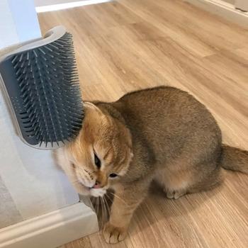 Szczotka dla kotów narożnik kot masaż samoobsługowa szczotka dla zwierząt kot ściera twarz z łaskotającym grzebieniem kot produkt Dropshipping tanie i dobre opinie Szczotki CN (pochodzenie) Z tworzywa sztucznego cats None Black Grey Green Blue 13*9cm 5 12*3 54 pet products for cats