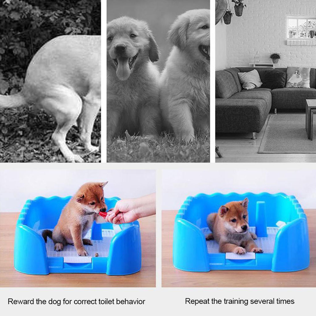 Portable Puppy Training Tray with Fence for Pet Dogs and Cats Potty and Pee Training Indoor 4