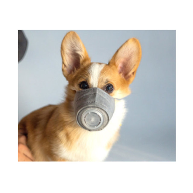 Dog Soft Face Cotton Mouth Mask Pet Respiratory PM2.5 Filter Anti Dust Gas Pollution Muzzle Anti-fog Haze Masks For Dogs