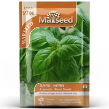 American Heirloom MARSEED Basil Herb Flower Vegetables Seedsplants Seedling Garden Outdoor