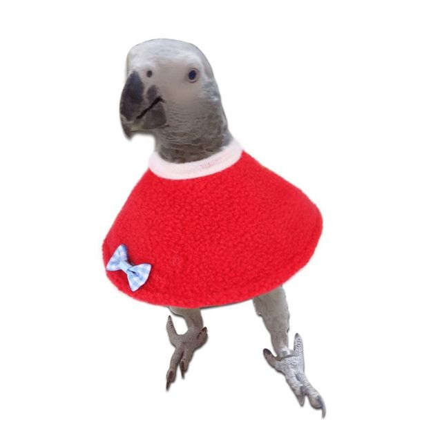 Elizabethan Parrot Collar  4