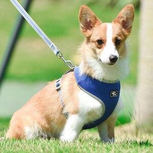Reflective Dog leash and harne
