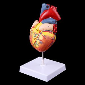 Image 5 - Disassembled Anatomical Human Heart Model Anatomy Medical Teaching Tool