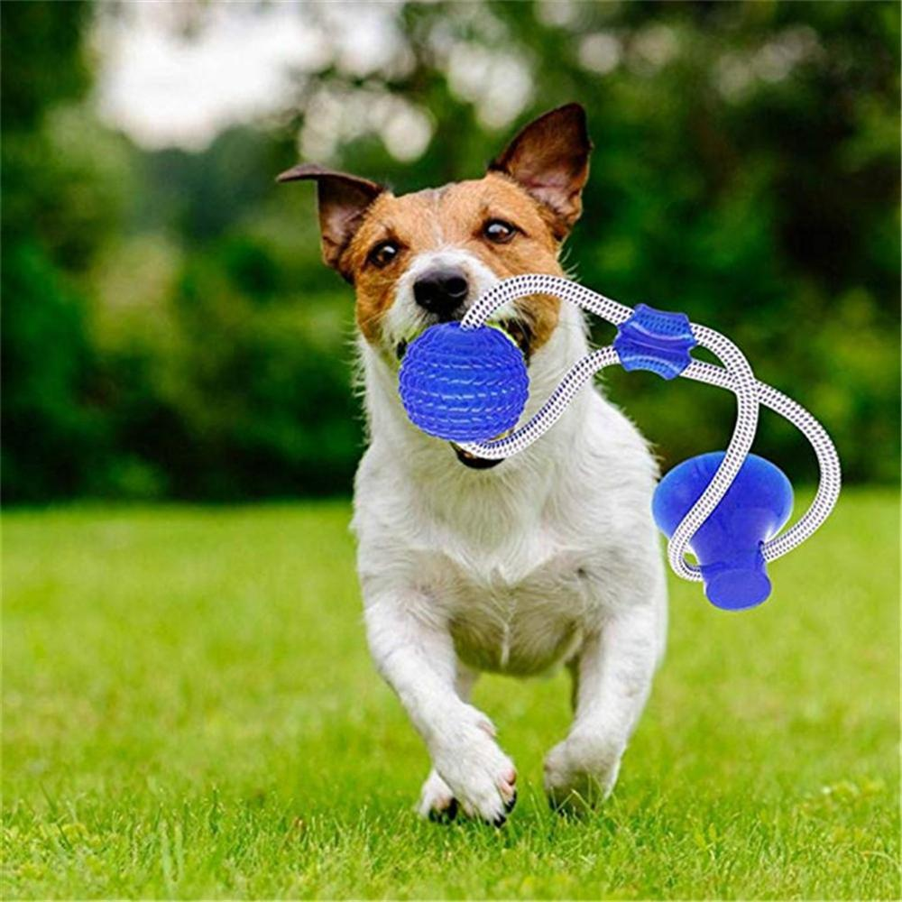 Dog Ball Pet Toys with Suction Cup Rubber Dog Toy Puppy Toys Dog Toothbrush Dog Toys for Small Large Dogs Petshop Popular Toys