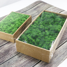 Artificial Green Plant Immortal Fake Flower Moss Grass for Home Living Room Decorative Wall DIY Flower Mini Accessories