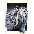 DIY Diamond Painting Tiger Animal Diamond Embroidery Mosaic Full Round Rhinestones Picture Portrait Home Decor Handwork Art Gift