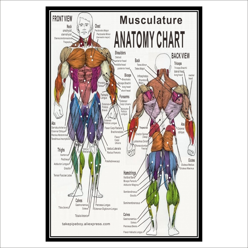 Endocrine 18 x 27 Anatomical Posters Male /& Female Nervous Respiratory Muscular Lymphatic Anatomy Charts Spinal Nerves Digestive 20 Pack Skeletal Laminated Circulatory
