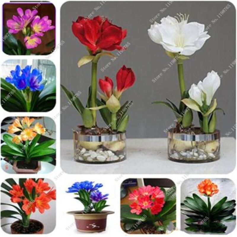 Plant Flower Bath Salts Clivia Essence 100Pcs XZZ-295
