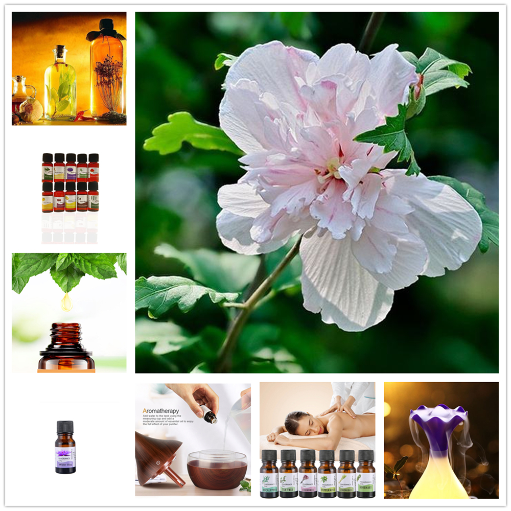 10ml Fresh Flower Verbena Essential Oils For Humidifier Plant Aromatherapy Tea Tree Oil Diffused Beauty Skin Care TSLM17