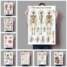Sistema muscular de anatomia humana, poster artístico para corpo humano com pintura em tela m216