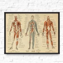 Pósteres e impresiones médicas de Anatomía Humana Vintage esqueleto patente cuadro sobre lienzo para pared cuadros médicos decoración de pared para oficina