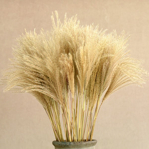 30pcs/lot Natural Dried Flower Reed Flower Bouquet for Home Decor Small Pampas Grass Wedding dry Flower Phragmites Flower Bunch