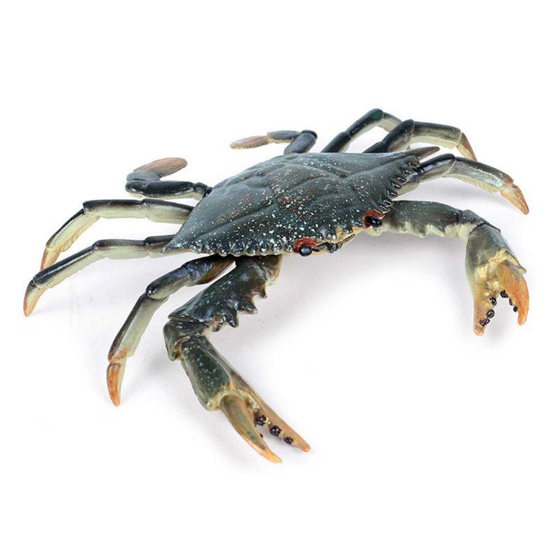 Incredible Shuttle Crab Realistic Marine Organism Model Bathroom Toy For Kids F42E
