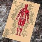 Anatomy Pathology An...