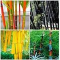 30 шт Редкие, гигантские Moso бамбука Семена Сад Природа растения дома Bambusa Лако дерево эссенция маска для губ TJZ-61