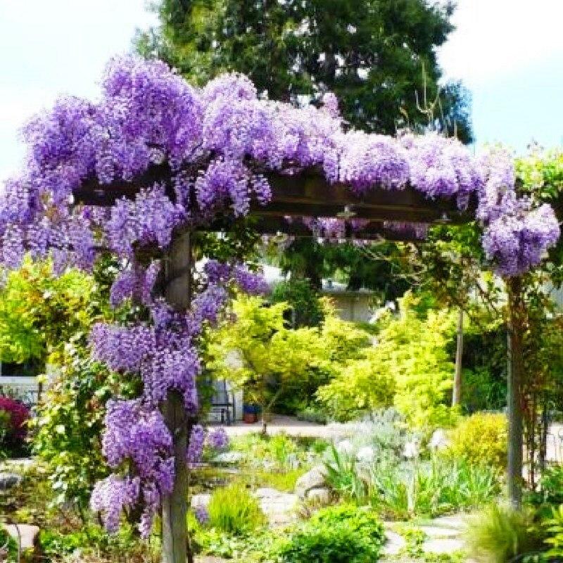 10pcs Flower Wisteria Bonsai Home Garden Hanging Decor For Home Garden Balcony Courtyard Flower Pot Plants
