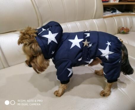 Stars Printed and Waterproof Dog Jacket for Chihuahua/Yorkshire Dogs Ideal for Winter 2