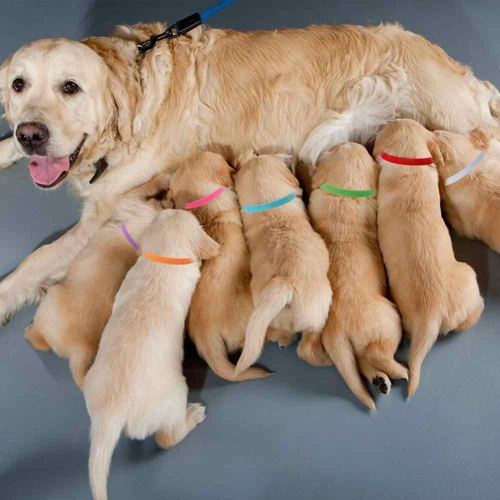 12 個ペット犬猫識別襟調節可能なペット Id 襟マークのための犬猫子犬ペットアクセサリー