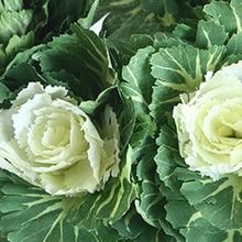 1*40 см Искусственный растительная капуста поддельные растения стимуляция цветок домашний декор США