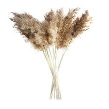 50cm 30/50 pçs natural secado phragmites & reed flores decoração buquê marrom boho secas pampas decoração casa quarto sala de estar