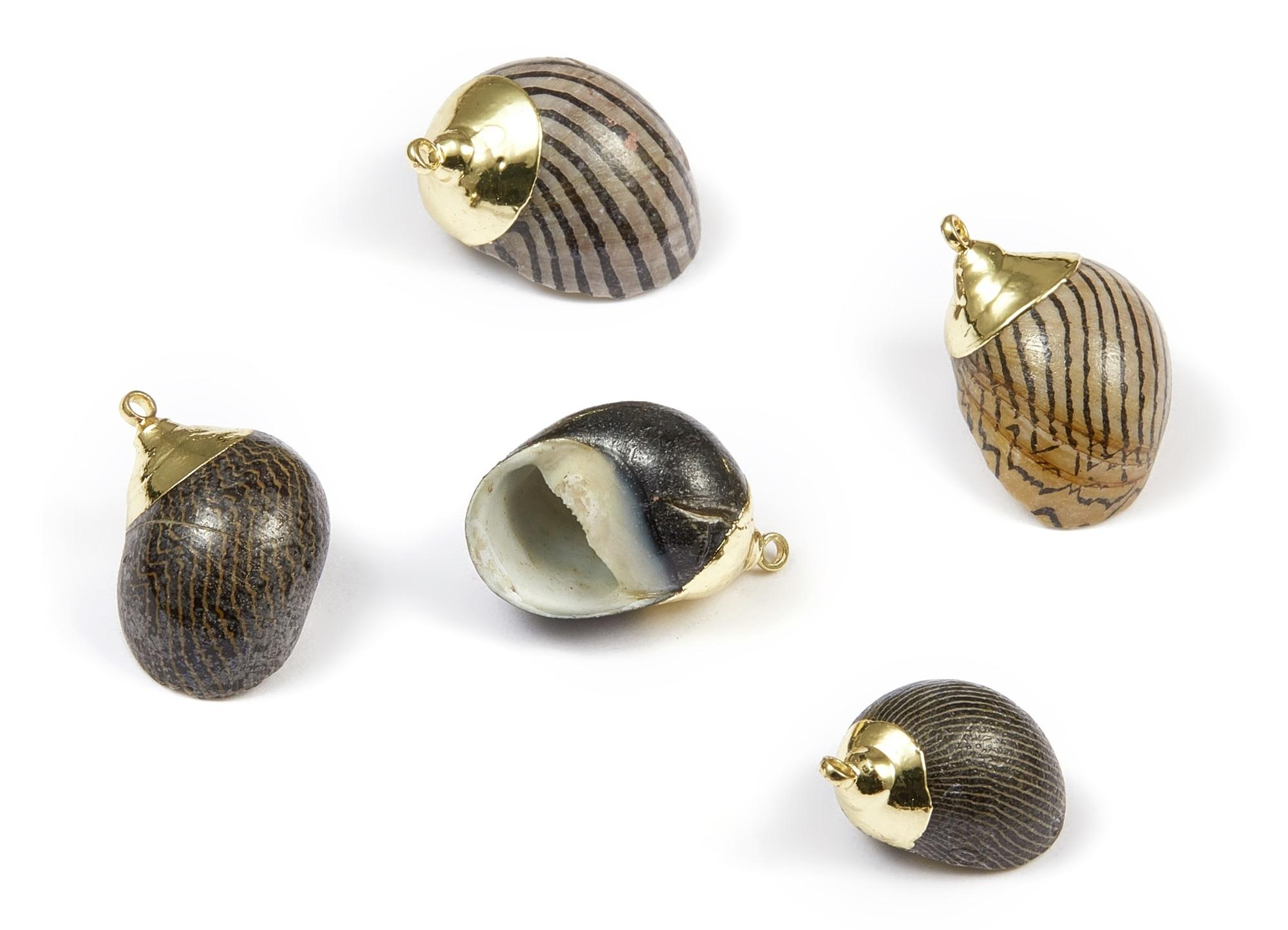 1 Hole SF1128C 25.43x23.33mm Whelk Seashell Pendant Natural Seashell Earrings Cone Seashell Charms
