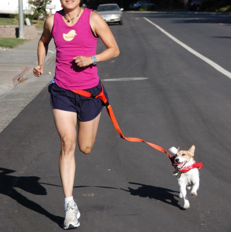 Thick Nylon Running Sling Morning Run Dog Hand Holding Rope Nursing Dog Dog Traction Rope Pet Supplies