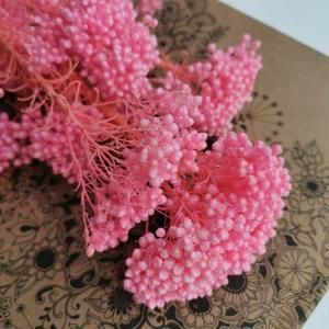 Image 5 - 80g/lot,Natural Eternal Preserved Mi Flower Bouque,Display Flower for Wedding Party Home Decoration accessories,arrange  flowers