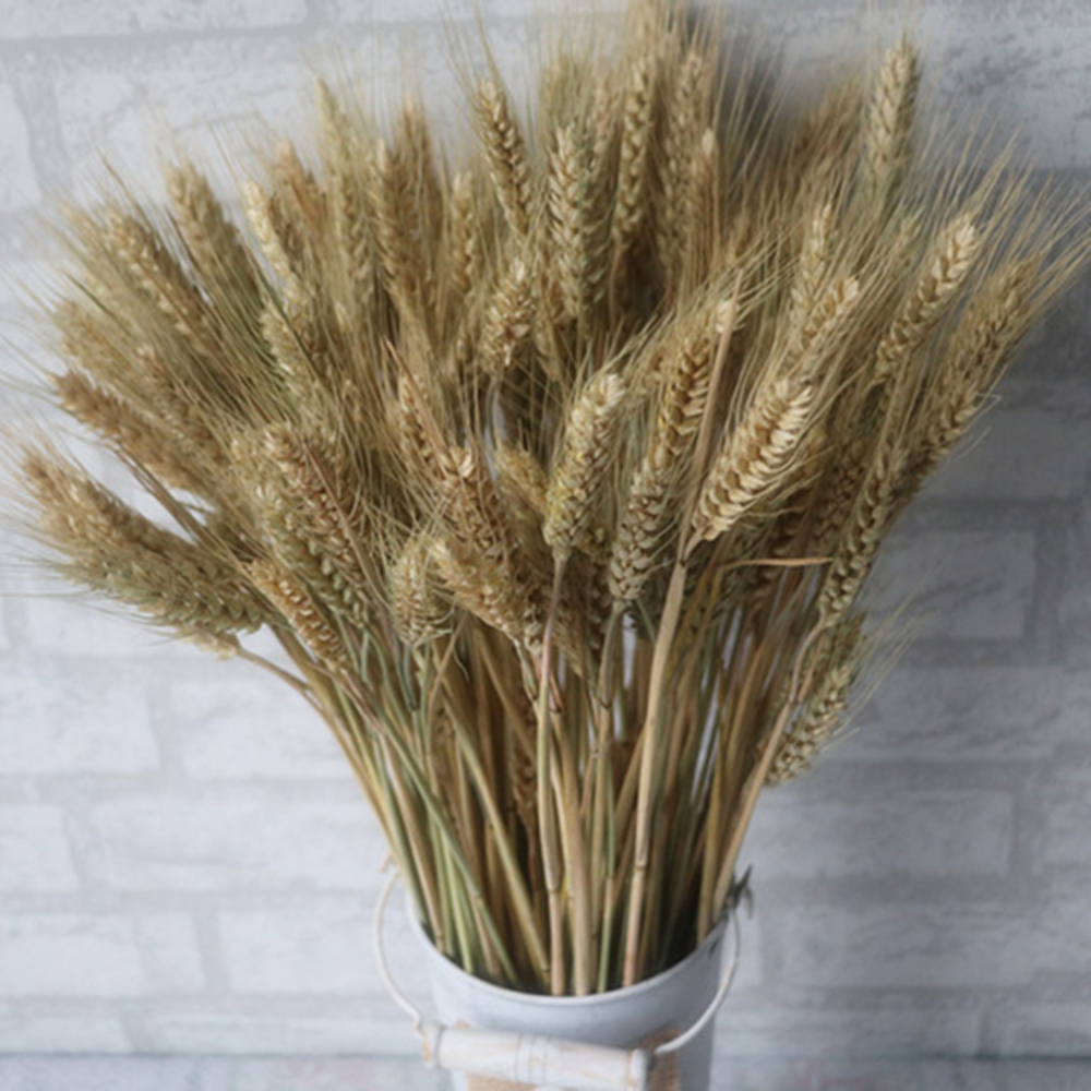 100Pcs lot Wheat Ear Flower Natural Dried Flowers for Wedding Party Decoration DIY Craft Scrapbook Home Decor Wheat Bouquet in Artificial Dried Flowers from Home Garden