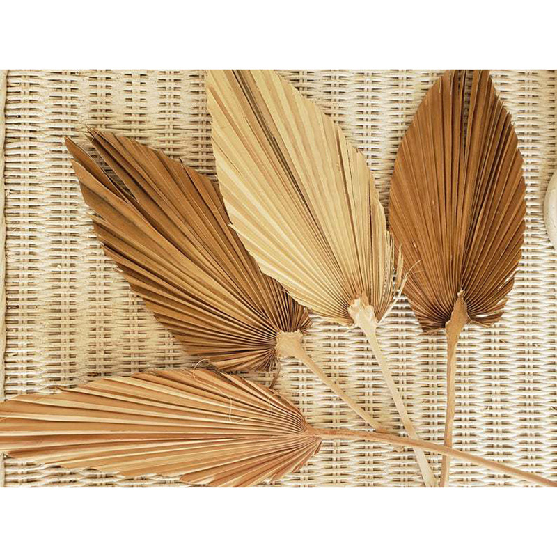 1pc Dried Flower Natural Pu Fan Leaf For DIY Home Shop Display Decoration Materials
