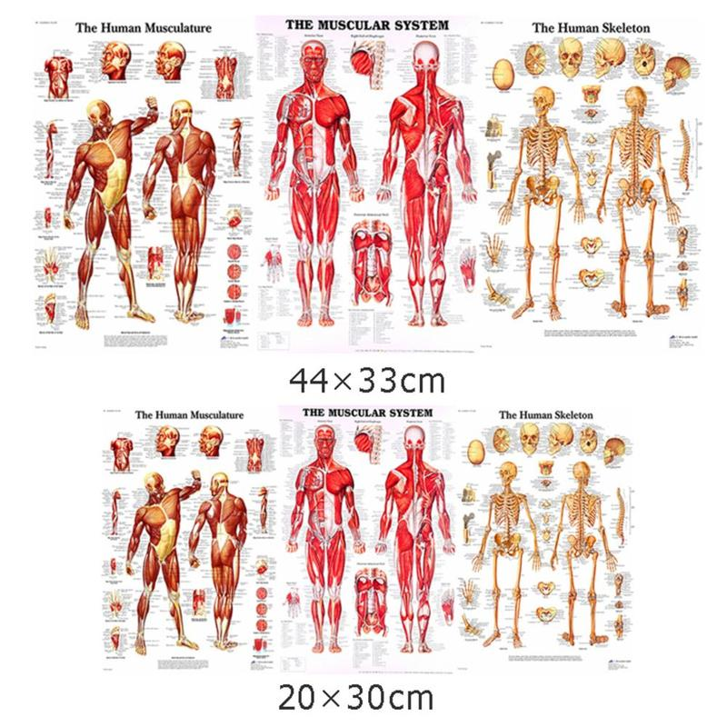 Cross-border Dedicated To Human Anatomy Posters Bone Muscle Teaching Medical Decoration Painting Poster Stationery