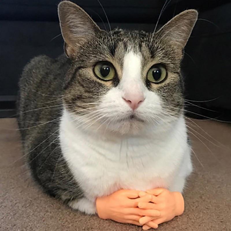 1 пара детей Оптовая цена завода массаж мизинца перчатки с имитацией человеческой руки для кошки Китти Кэт Хэллоуин розыгрыш аксессуары