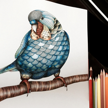 Coloring-Book Adult Painting for Kids Relieve-Stress Kill-Time 4pcs 24-Pages Animal-Kingdom