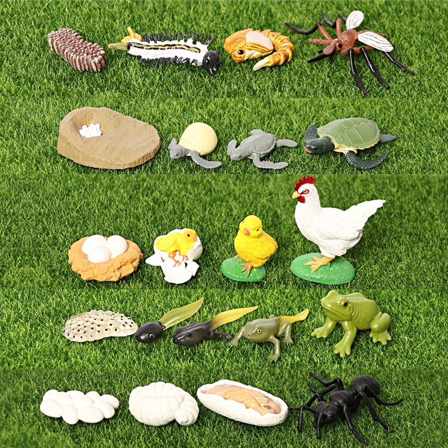 Simulation Animals Insects Frogs,Turtle,Ant,Mosquito,Chicken Growth Life Cycle Figurines Model Action Figures Toy For Kids Gift