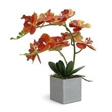 INDIGO  (1set ) Orchid Arrangment Real With Vase Touch Bonsai Wedding Party Flower Decoration Centerpiece  Florist Dropshipping