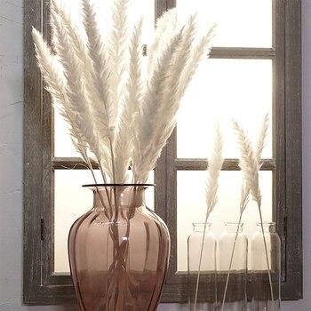 цена на 15 Pcs Dried Small Pampas Grass Phragmites Communis Decoration for Home Store Wedding MU8669
