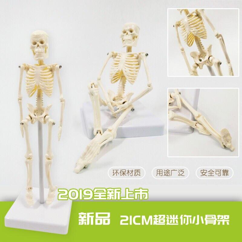 Mini Flexible Human Anatomical Anatomy Skeleton Bone Model Decoration Medical Human Skeleton  Manikin Toys