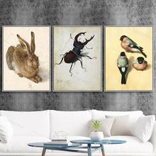 Домашний декор Альбрехт Дюрер картина холст печать птица плакат