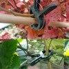 20 40 60Pcs Plastic Plant Support Clips for Garden Plants Hanging Vine Greenhouse Vegetables Potted Plants Garden Ornament discount