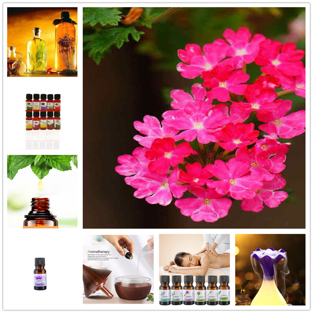 10ml Water-soluble Plant Essential Oils To Relieve Stress Humidifier Verbena Fragrance Oil Air Fresh Diffuser Aromatherapy TSLM8