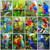Evershine Diamond Painting Animals Full Square 5D DIY Diamond Embroidery Bird Rhinestones Mosaic Parrot Cross Stitch Home Decor