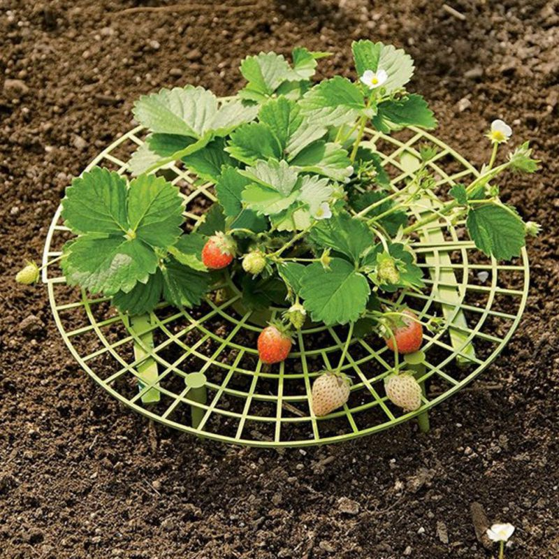 5Pcs Plant Plastic Tool Strawberry Growing Support Rack Strawberry Flower Plastic Stand Frame Gardening Supplies