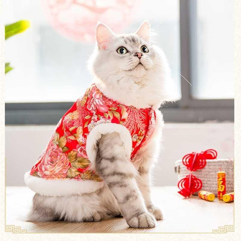 Kedi giysileri sonbahar ve kış kalın iki bacaklı Tang takım elbise, kukla kedi, kısa İngiliz, Garfield, yeni yıl şenlikli artı kadife ceket