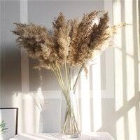 20 шт., сушеные растения, пампасы, трава, натуральный фрагмит, коммунис, сырой цвет, свадебный цветок, букет, украшение для дома, 56-60 см в высоту