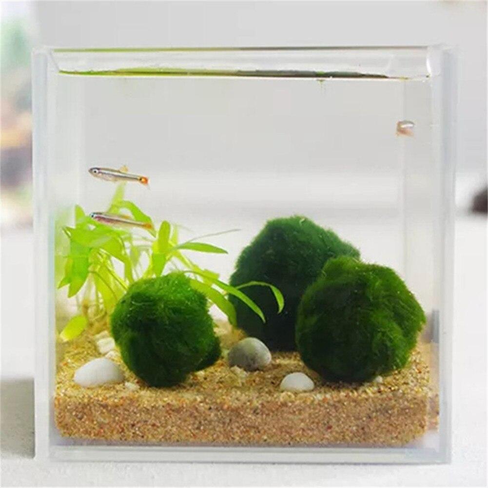 Japan Genuine Aquarium Ball Landscaping 1cm Chlorella Algae Marimo Happy Environmental Green Seaweed Ball EZLIFE PT0305