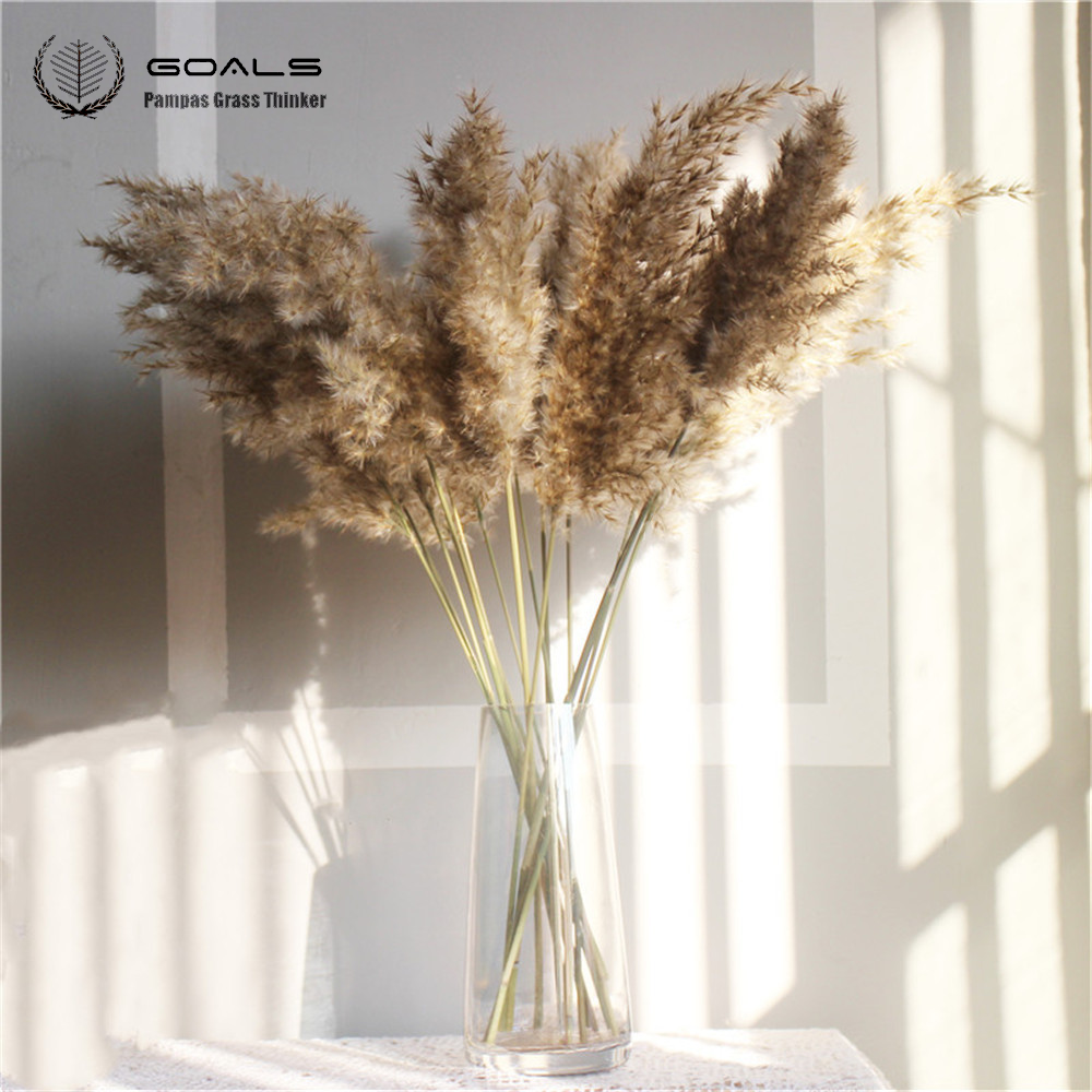 Wedding-Flower Grass-Decor Pampas Real-Dried Bunch 8pcs 20pcs
