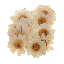 10x Pressed Dried Real Ice Flowers For DIY Scrapbooking Art Crafts Necklace