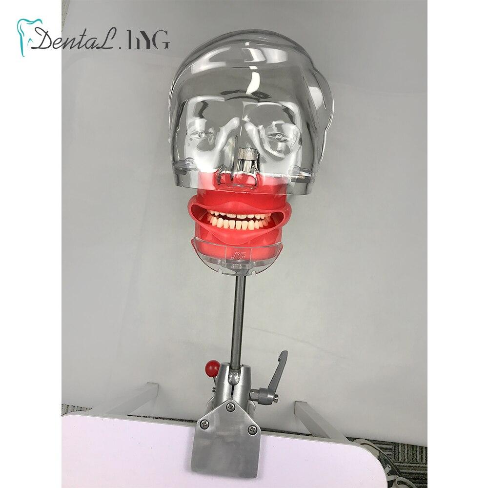 banco montar modelos dentarios para dentista modelo ensino ajuste 360 graus 05