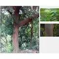Bois naturel indien bois de santal huile essentielle boule parfum Anti rides, hydratant et apaisant Stress 8ml