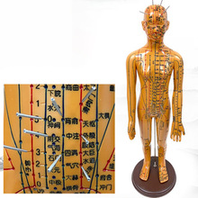 52cm Medical Chinese Medicine Meridians Acupuncture Moxibustion Model Acupuncture Point Mannequin Acupuncture Model Faster ships